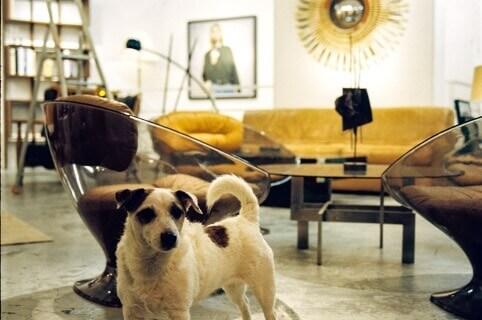 Dog in a condo